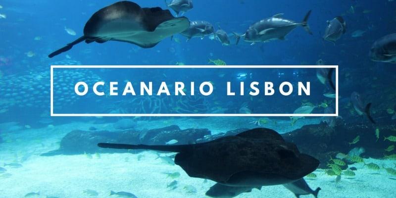 Oceanario Lisboa visiting the largest aquarium in Europe