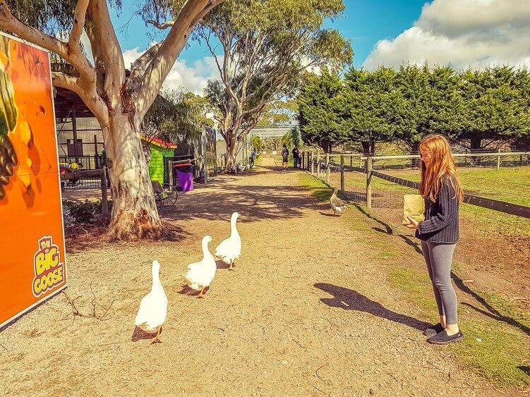 Mornington Peninsula Attractions