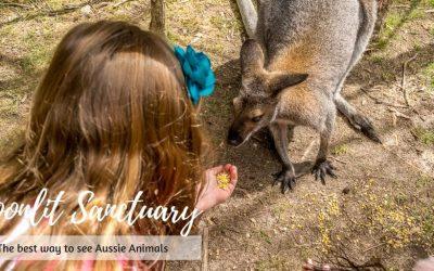 Moonlit Sanctuary where the Aussie animals roam