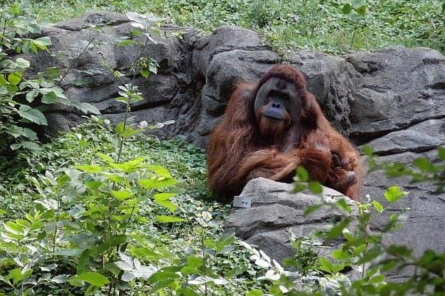 wildlife in Indonesia