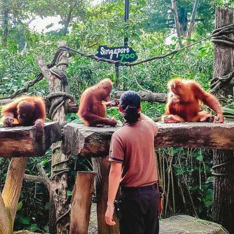 Zoo keeper at singapore Zoo