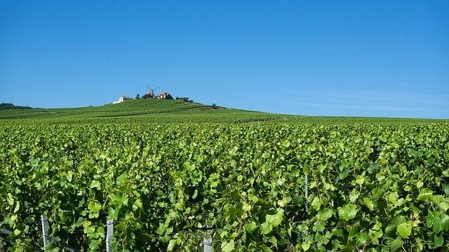 wine in France