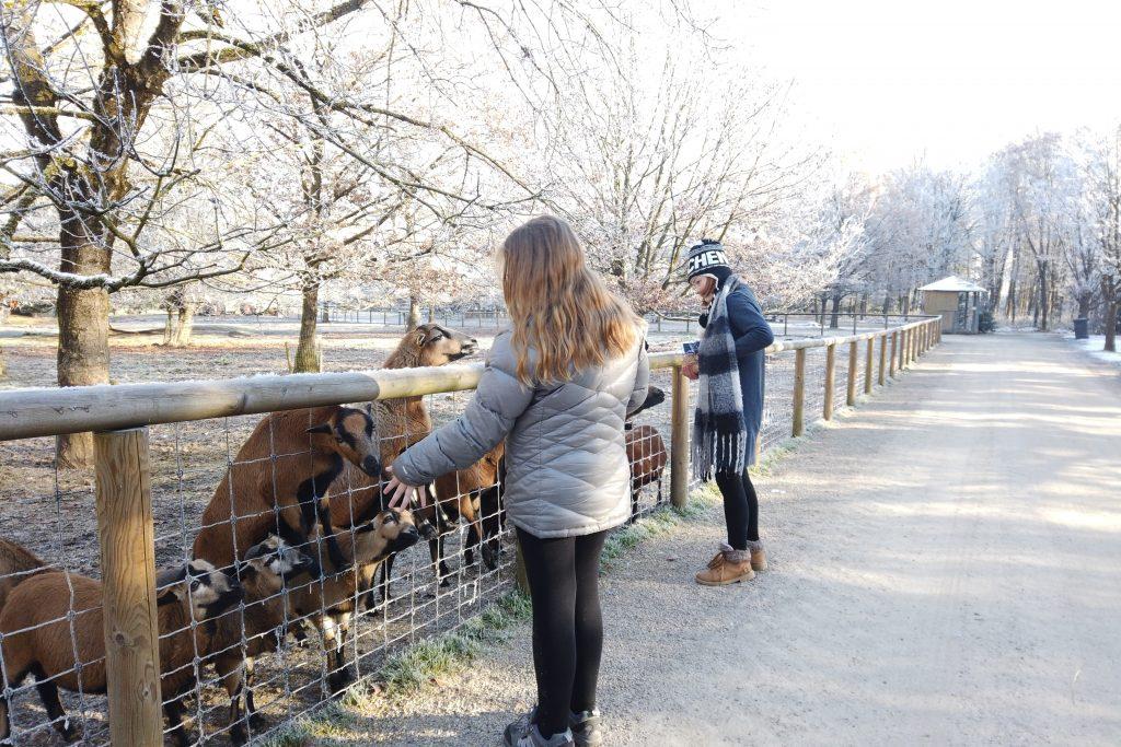 Feeding animals at Park Poing