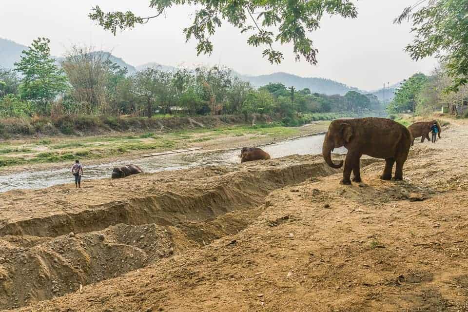 The Elephants roaming