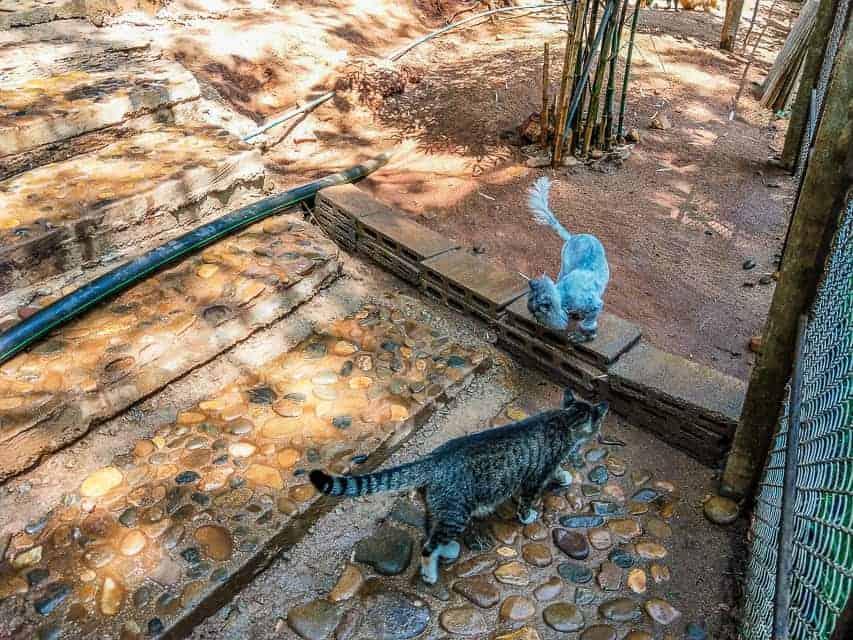 The cat sanctuary at Elephant Nature Park