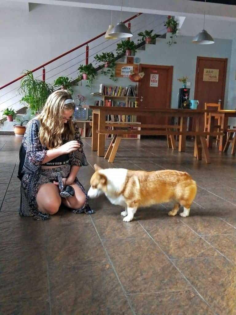 girl patting a dog at beijing Hostel