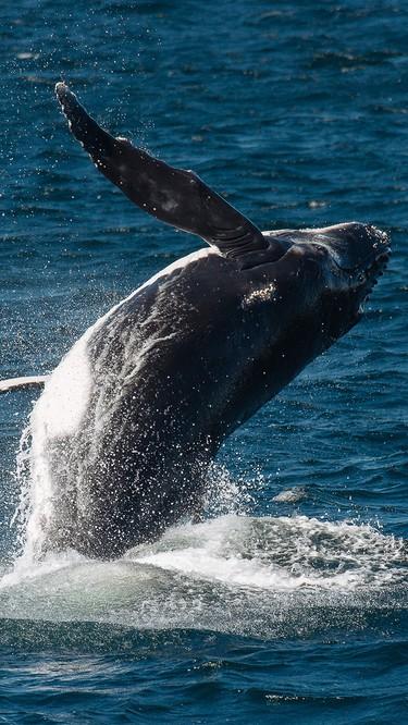 Whales off the coast of Merimbula